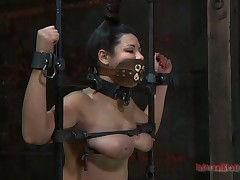 Restrained beauty made to submit to stud horny demands